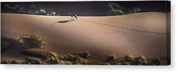 Gemsbok Oryx Gazella On Red Dunes Canvas Print by Panoramic Images