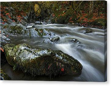 Gemstone   Canvas Print by John Chivers
