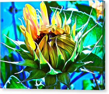 Genesis Canvas Print by Gwyn Newcombe