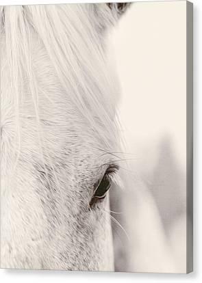 Gentle Beauty Canvas Print by Debby Herold