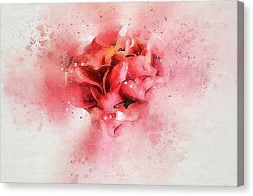Gentle Camellia Canvas Print
