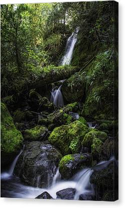 Gentle Cuts Canvas Print by James Heckt