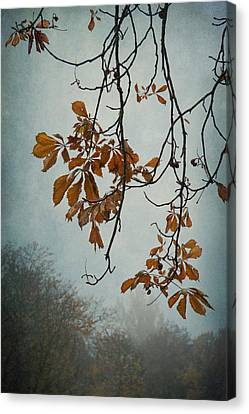 Gentle Fall  Canvas Print by Maggie Terlecki