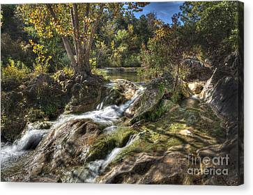 Gentle Mountain Stream Canvas Print by Tamyra Ayles