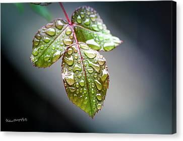 Gentle Rain Drops Canvas Print