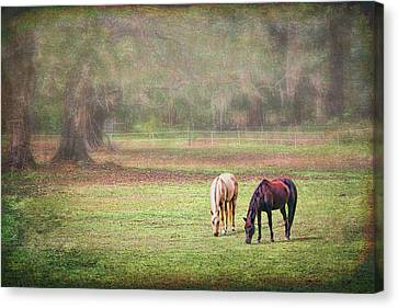 Canvas Print featuring the photograph Gently Grazing by Lewis Mann