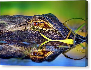 George The Alligator Canvas Print by Mark Andrew Thomas