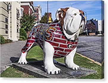 Georgia Bulldog Canvas Print by John Greim