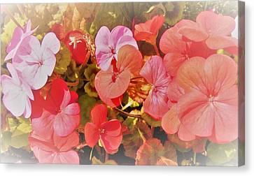 Geranium Canvas Print by Ann Johndro-Collins