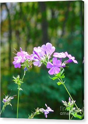 Geranium In Fall Canvas Print