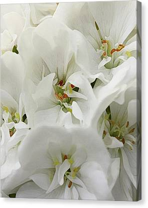Macro Geranium Flower Canvas Print - Geranium Wears White by Amy Neal