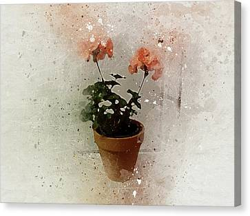 Geraniums 2 Canvas Print
