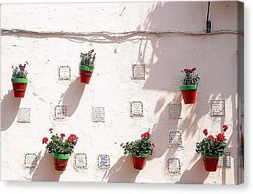 Geraniums Ganging Up Canvas Print by Jez C Self