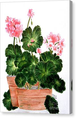 Geraniums In Clay Pots Canvas Print by Terri Mills