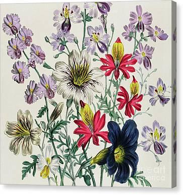 Purple Flowers Canvas Print - Geraniums by Jane Loudon