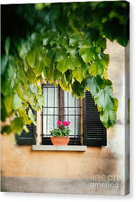 Canvas Print featuring the photograph Geraniums On Windowsill by Silvia Ganora
