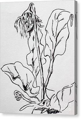 Gerber Study I Canvas Print by Vonda Lawson-Rosa