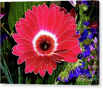 Gerbera Bella Canvas Print by Mariola Bitner