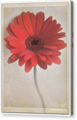 Canvas Print featuring the photograph Gerbera Daisy by Lyn Randle