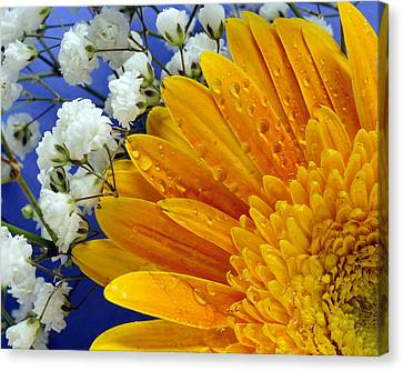 Gerbera Daisy With Babies Breath Canvas Print by Laura Mountainspring