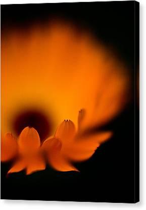 Flowers Gerbera Canvas Print - Gerbera Fire by Mike Reid