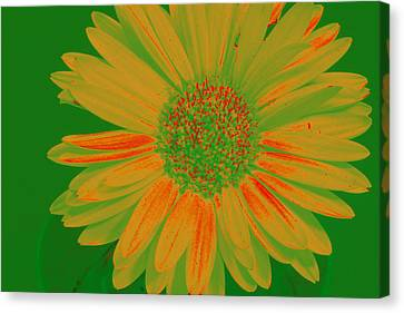 Canvas Print featuring the photograph Gerbia Daisy Sabattier by Bill Barber