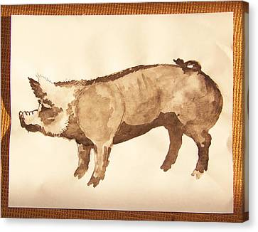 Canvas Print featuring the photograph German Pietrain Boar 31 by Larry Campbell