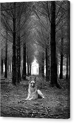 German Shepherd Canvas Print - German Shepherd Dog Sitting Down In Woods by Adam Hirons Photography