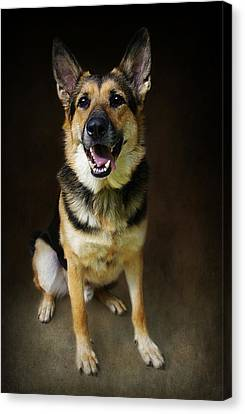 German Shepherd Dog Thor Canvas Print by Stephanie Calhoun
