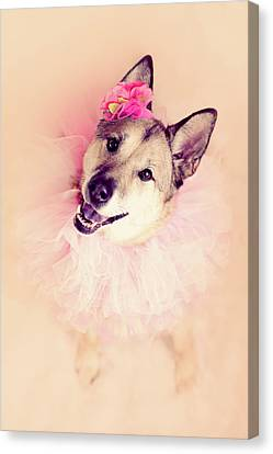 German Shepherd Mix Dog Dressed As Ballerina Canvas Print by R. Nelson