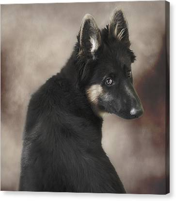 German Shepherd Puppy 1 Canvas Print by Wolf Shadow  Photography