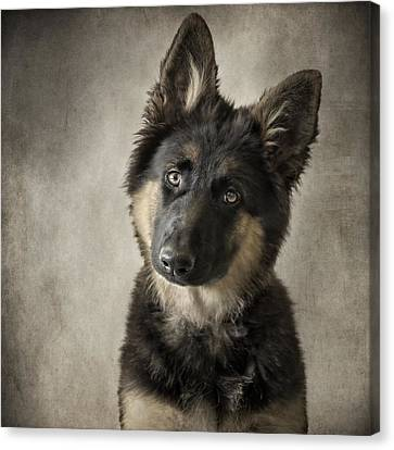 German Shepherd Puppy Canvas Print by Wolf Shadow  Photography
