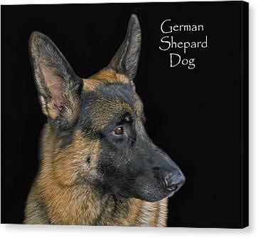 German Shhepard Dog Canvas Print by Larry Linton
