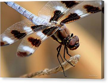 Dragonfly Eyes Canvas Print - Get A Grip Dragonfly Close Up Art by Reid Callaway