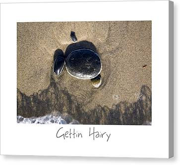 Gettin Hairy Canvas Print by Peter Tellone