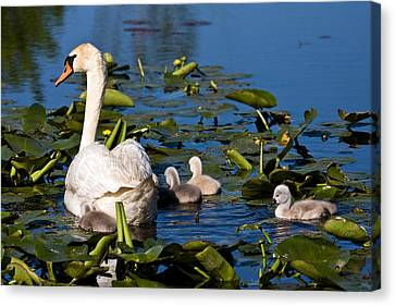 Getting Close To Mom Canvas Print by James Marvin Phelps