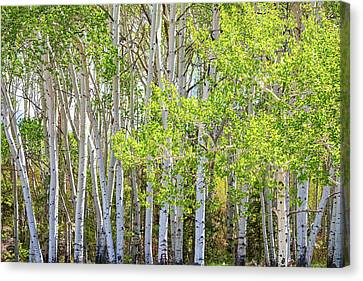 Getting Lost In The Wilderness Canvas Print by James BO Insogna