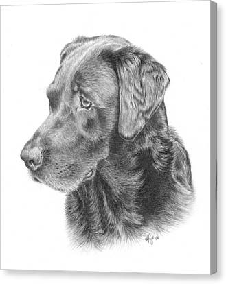 Ghira - Chocolate Lab Canvas Print by Heather Page