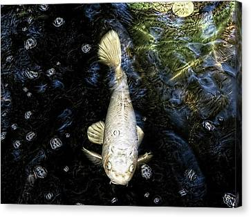 Ghost Fish Canvas Print by Paul Cutright