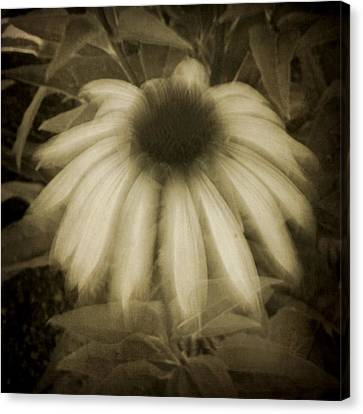 Ghost Flower Canvas Print by Patricia Strand
