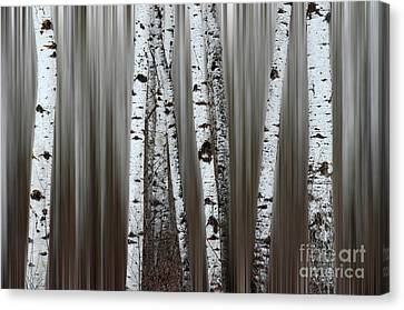 Canvas Print featuring the photograph Ghost Forest 1 by Bob Christopher