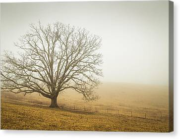 Tree In Fog - Blue Ridge Parkway Canvas Print