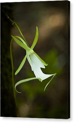Ghost Orchid  Canvas Print by Rich Leighton