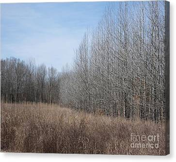 Ghost River Bottomland Lagrange Tn Canvas Print