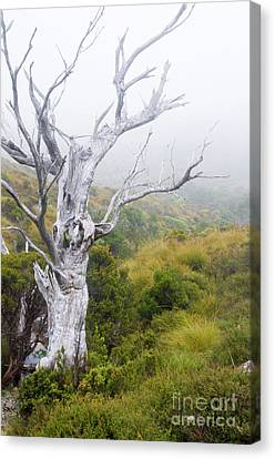 Canvas Print featuring the photograph Ghost by Werner Padarin