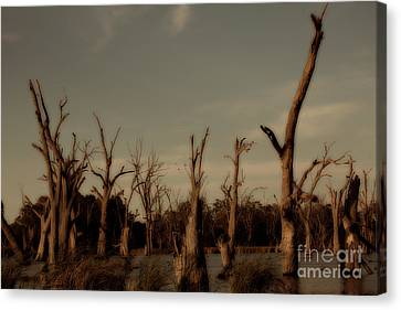 Canvas Print featuring the photograph Ghostly Trees by Douglas Barnard