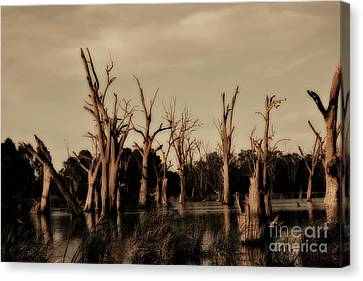 Canvas Print featuring the photograph Ghostly Trees V2 by Douglas Barnard