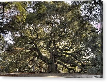 Angel Oak Canvas Print - Giant Angel Oak Tree Charleston Sc by Dustin K Ryan