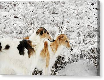 Sight Hound Canvas Print - giant Borzoi hounds in winter by Christian Lagereek