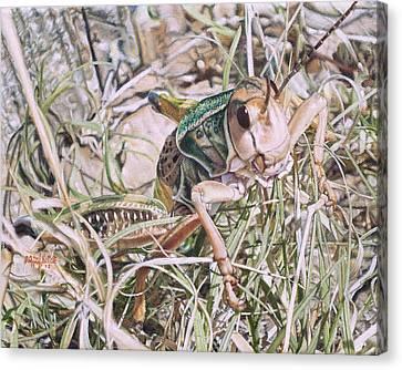 Giant Grasshopper Canvas Print by Joshua Martin